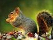 Play Puzzle Squirrel Game